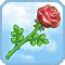 Rose der Aphrodite