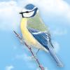 Wie kümmert man sich um Vögel und spielt mit ihnen