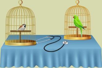 Kümmere dich um die Vögel der anderen Züchter in deinem Tiersalon oder in deiner Tierklinik, damit sie mit Hilfe der Angestellten deines Vogelparkes fortschreiten.