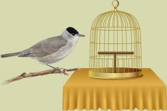 Die Vögel, die aufgegeben wurden